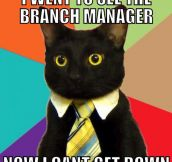 Business Cat is back…