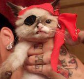 Captain Cat Sparrow…
