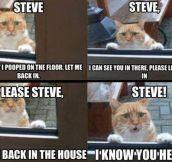 Steve's cat…