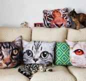 Cat lady detected…