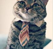 College cat is looking for a job…
