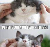 Cat behavior in a nutshell…