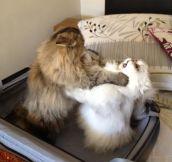 Sociopath Cat…