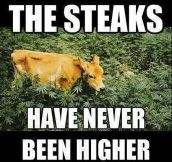 High steaks…