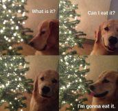 My dog's logic…