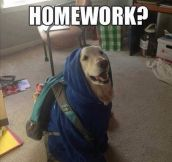 Student dog problems…