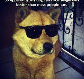 Terminator V: Dog Days…