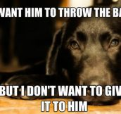 Every dog's logic…