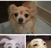 Dogs with eyebrows…