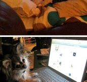 Dogs using computers…