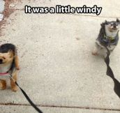 You can say it was windy…