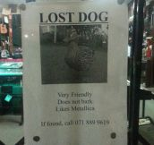 Friendly dog missing…