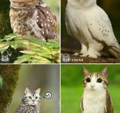The combination of a cat and an owl…