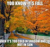How you know it's fall…