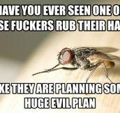 Planning something evil…