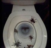 Scariest toilet seat cover ever…