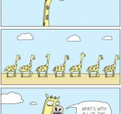 Giraffe traffic…