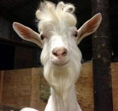 If Gandalf was a goat…