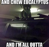 All out of Eucalyptus…