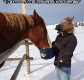 Quit horsing around…