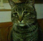 Innocent cat…