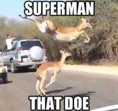 That doe…