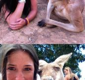 Suave kangaroos…