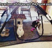 Kitty prison…