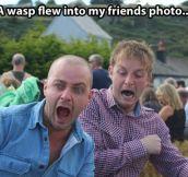 Wasp attack…