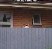 Neighborly cat…