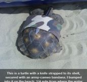 Retired ninja turtle…