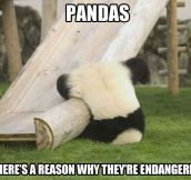 Silly panda that's not how you playground…