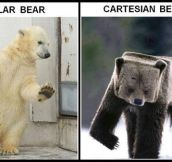 Cartesian bears are so cool…