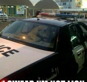 Lion goes to jail…