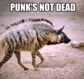 Punk's better than ever…