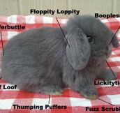 The anatomy of a bunny…