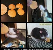 Rat-sized pancakes…