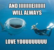 Whitney Houston whale shark…