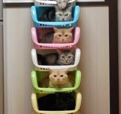 Efficient cat storage…