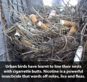 Smart birds…