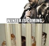 Brace yourselves kitties…