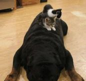Rotties are not so bad..