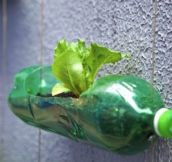Interesting Way to Recycle PET Bottles (5 pics)