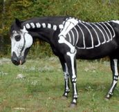 Skeleton Horse [8 Pics]