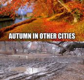 Autumn In My City