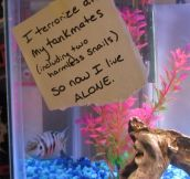 "After Dog Shaming We Present You ""Fish Shaming"" (10 Pics)"