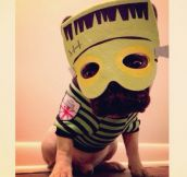 These Pets Are Perfectly Ready For Halloween (22 pics)
