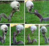 SQUIRREL PLAYS WITH HALLOWEEN MASK HUNG IN YARD FO
