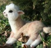 Stop everything! Baby llama