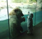The bear looks so perplexed!